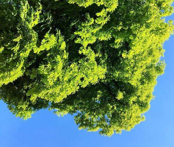 la co-location, un choix responsable pour l'environnement